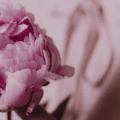 5 Geschenke, die deine Verletzlichkeit für dich bereithält.